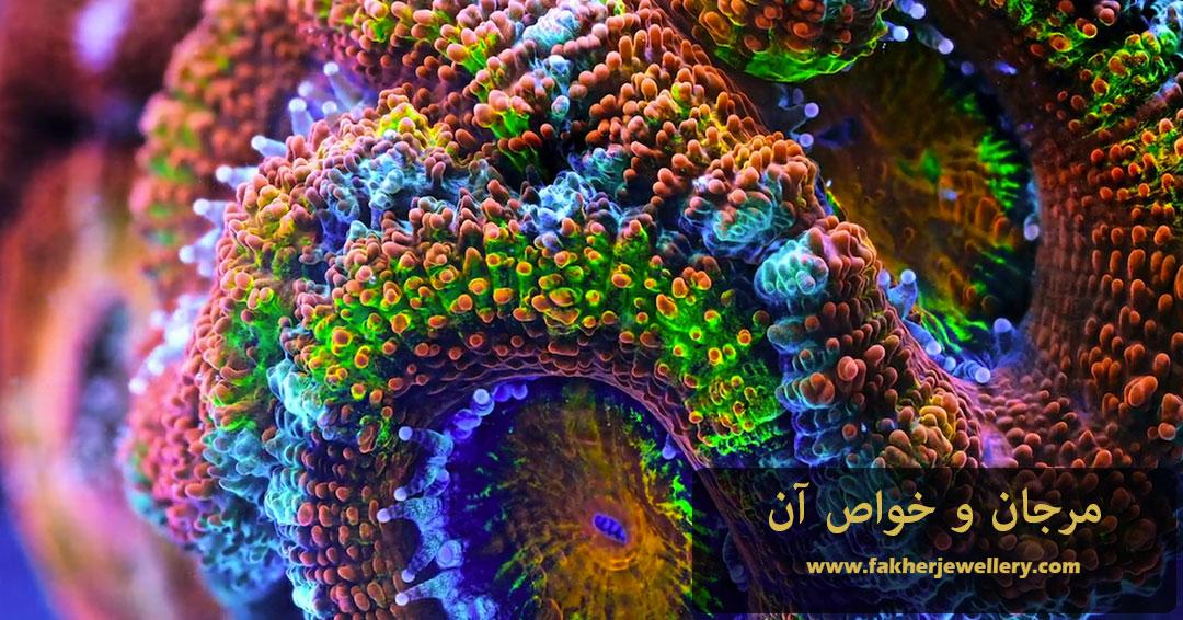 خواص مرجان ( Coral )